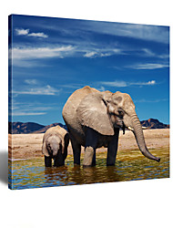 VISUAL STAR®Animal Elephant Wall Decoration Canvas Painting Art for Kids Room,Stretched Canvas Ready to Hang