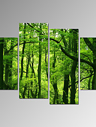 VISUAL STAR®Summer Forest Canvas Printing/Landscape Picture Print Art/Modern Wall Art Ready to Hang