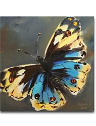 iarts®blue und gelben Punkt Tierarten Schmetterling 3d Ölmalerei auf Leinwand