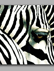 Black and White Zebra Eye Oil Painting 100%  Handmade Brand Painting