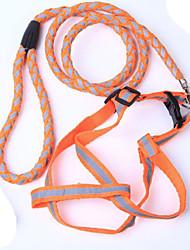 Hunde Leinen / Hundehalsband Reflektierend Rot / Schwarz / Grün / Blau / Orange Nylon