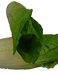 Simulation Green Cabbage
