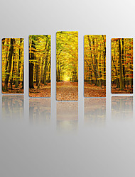 Sunrise Forest on Canvas wood Framed 5 Panels Ready to hang for Living Decor