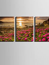 E-HOME® Stretched Canvas Art The Flowers On The Hillside Decoration Painting  Set Of 3