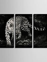 Животное Холст для печати 3 панели Готовы повесить , Вертикальная