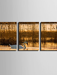 E-HOME Stretched Canvas Art Geese in The Reeds Decoration Painting Set Of 3