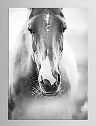 Canvas Set Animal Fantasy Modern Classic,One Panel Canvas Vertical Print Wall Decor For Home Decoration