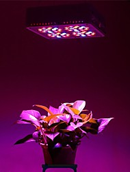 10900 LED Grow Lights Red Blue Pendant Lights Grow Lights 1 pcs