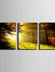 E-HOME Stretched Canvas Art Morning in The Woods Decoration Painting Set Of 3