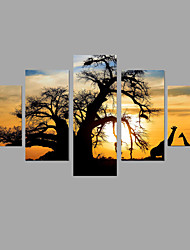 HD Print  Painting 5 Piece/set African sunrise Wall Art 5pcs/set Home Decor (No Frame)