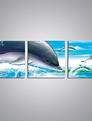 Stretched Canvas Prints Cartoon Dolphins Contemporary Art for Wall Decoration