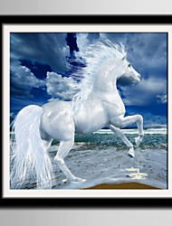 E-HOME® Framed Canvas Art White Horse Running On The Beach Framed Canvas Print One Pcs