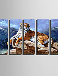E-HOME Stretched Canvas Art A Tiger Resting On Stone Decoration Painting Set Of 5