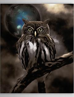 Reproduction transférée sur toile Art Night Owl par couleur Bakery