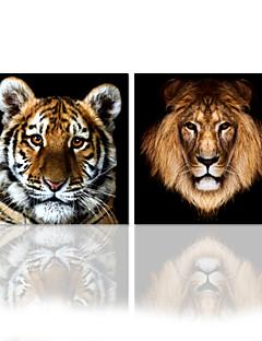 star®tiger visuelle toile tendue impression art / lion quantité élevée peinture murale prêt à accrocher