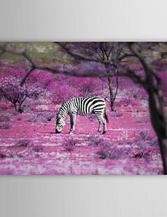 Animal Impressão em tela Um Painel Pronto para pendurar,Horizontal