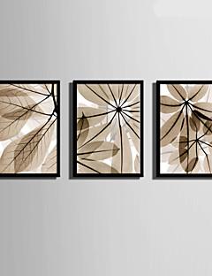 art botanique encadr en ligne art botanique encadr pour 2017. Black Bedroom Furniture Sets. Home Design Ideas