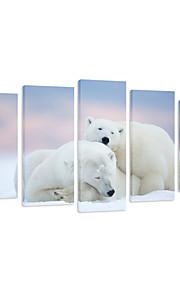 시각 STAR® 중단 할 준비가 크리스마스 장식을위한 북극곰 동물 캔버스 인쇄 5 개,