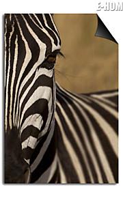 전자 home® 선택 자기 인쇄 교체 예술 얼룩말 장식 그림 멀티 스타일
