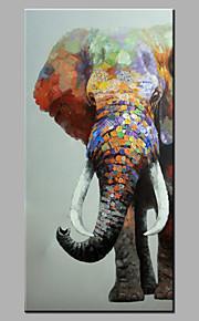 手描きの 動物 / ポップアップModern 1枚 キャンバス ハング塗装油絵 For ホームデコレーション