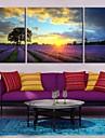 sträckt arbetsytan konst under solnedgången av lavendel gård landskap set om 3