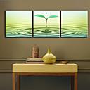 Protezala Canvas print umjetnosti Botanički Sprout Set od 3