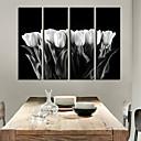 Reprodukce na plátně umění Květiny a rostliny White Tulip Sada 4