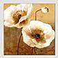 ulja na platnu cvijet stil, platno materijal, slikarstvo samo veličina: 60 * 60 cm.
